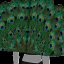 Avatar Peacock feathers